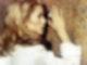 Ein modisches Vorbild: Catherine Deneuve in Belle de Jour