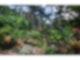 Paradiesische Gartenanlage auf Barbados
