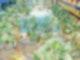 So werden die neuen Palmnester in der Therme Erding aussehen