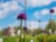 Allium Sternwarte