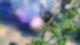 Raven & Summit – Photo Art – Garden Display
